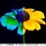TACV-2_dr.schmitt-flower_canvas